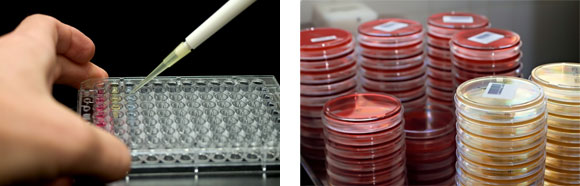 Cultures and Pipetting